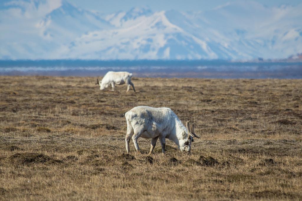 http://ovp.fi/./random/15-18.6.2012_Svalbard60.jpg